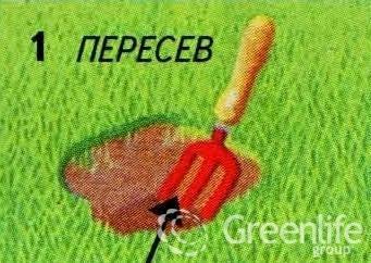 Пересев1
