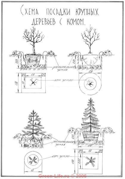 Схема посадки крупномеров с
